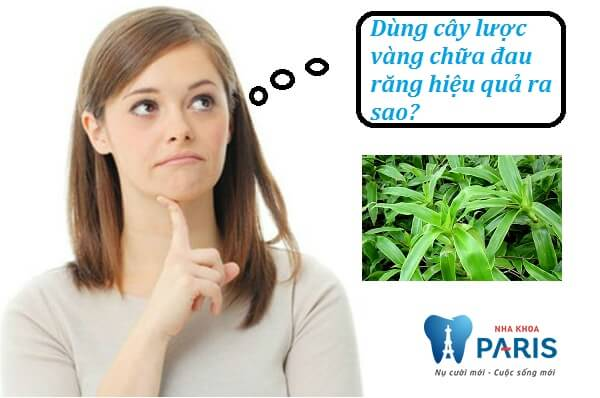 Dùng cây lược vàng chữa đau răng thế nào hiệu quả cao? 1