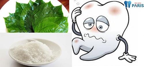 """Mẹo chữa nhức răng bằng lá lốt """"Tại Nhà"""" ĐƠN GIẢN & HIỆU QUẢ 2"""