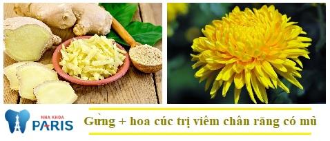 Theo dân gian hoa cúc kết hợp với gừng là cách chữa viêm chân răng có mủ